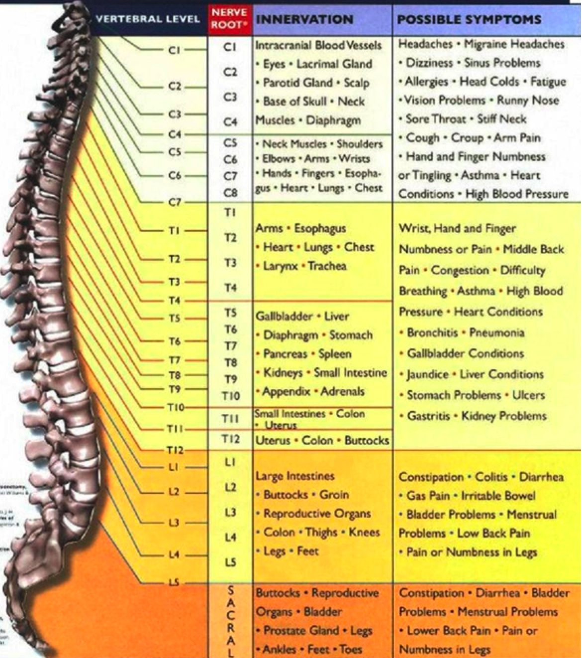 10 things most people don t know about chiropractic hoosier